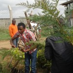 Collection of tree seedlings by the men present